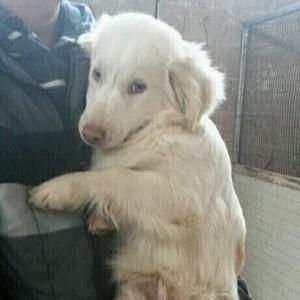 enpa febb 2016 panna x anteprima - cani salvati dai nomadi