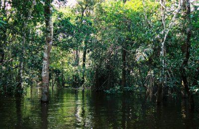amazzonia-2