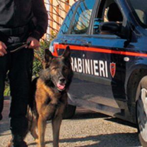 carabinieri-cinofili-ricerche-1