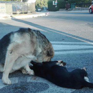 cane veglia amico morto.2