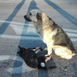 cane veglia amico morto