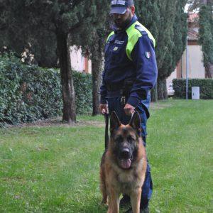 Polizia locale cane