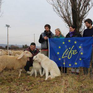 1724-2017 Maremmano-gregge-Life