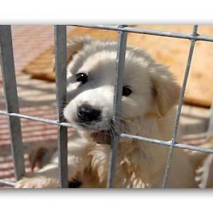 Una povera bestia muore di indifferenza altovicentinonline - Portare il cane al canile ...